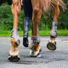 How can getting horseshoes for your horses benefit them in the long run?